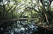 Live Oak Hammock Forest,Florida,USA