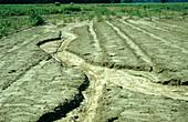 Gully Erosion of Field