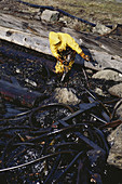 Oil Spill Cleanup