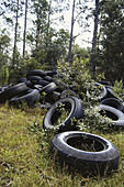 Used Tires Illegally Dumped in Forest