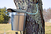 Maple Syrup Pail