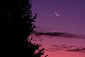 The Thin Cheshire Moon