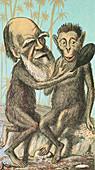 Charles Darwin Caricature,1874