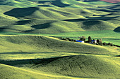The Palouse Hills