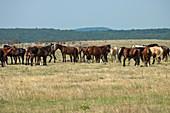 Wild Horses,Oklahoma,USA