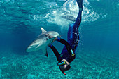 Lemon shark and diver
