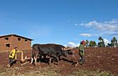 Small Farm Family Working in Fields