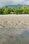 Sea star at Tua Koin resort