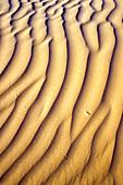 Sand Dunes and Animal Tracks