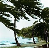 Hurricane Waves Strike Seawall