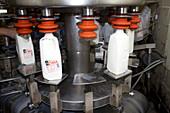 Bottling Plant at Burley