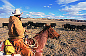 Cowboy Carrying out a Cattle Drive