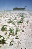 Topsoil Erosion