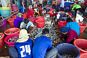 Fisherman Sorting Fish,Thailand