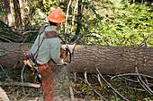 Sawyer Cutting a Tree