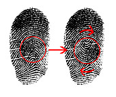 Fingerprint Mutilation