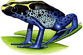 Dyeing Poison Dart Frog,Illustration
