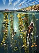 California Kelp Forest,Illustration