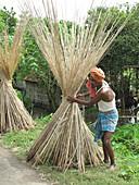 Bundling Reed,India