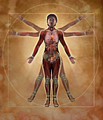 Vitruvian Woman,Illustration