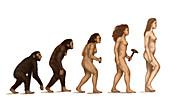 Human Evolution,illustration