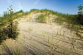 Lake Huron Sand Dune