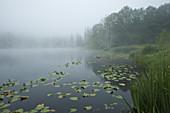 Lake Sunrise in Fog