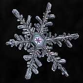 Dendrite Snowflake