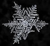 Broken Snowflake