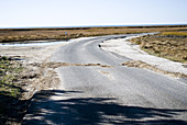 Road Through Marsh at Low Tide