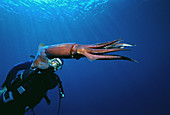 Diver And Deep Sea Squid