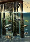 Life under an ocean pier
