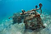Shopping Carts and Fish