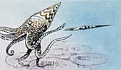 Habitat of Orthoceras,illustration
