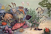 Various sea animals,illustration
