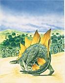Stegosaurus dinosaur,illustration