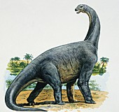Close-up of a cetiosaurus,illustration