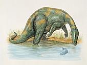 Baryonyx dinosaur,illustration
