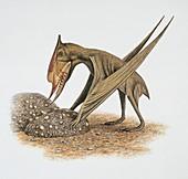 Side profile of a bird,illustration