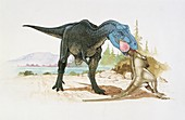 Dinosaur eating another,illustration