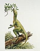 Dinosaur eating a leaf,illustration