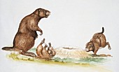 Three rats on a landscape,illustration