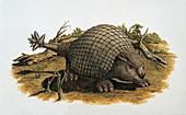 Close-up of an armadillo,illustration
