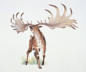 Close-up of a deer,illustration