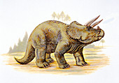 Illustration of Triceratops