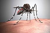 Aedes aegypti mosquito,illustration