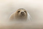 Seal pup in a storm