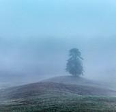 Mist-shrouded tree at dawn