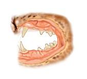 Cat teeth plaque,illustration