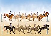 Horses show jumping,illustrations